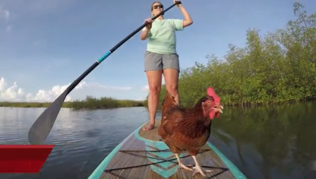 This is a story about a girl and her chicken who like to paddleboard together in the Florida Keys