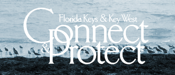 Connect & Protect is a sustainability program for Florida Keys tourism marketing