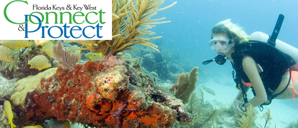 Connect & Protect is a tourism sustainability program in the Florida Keys