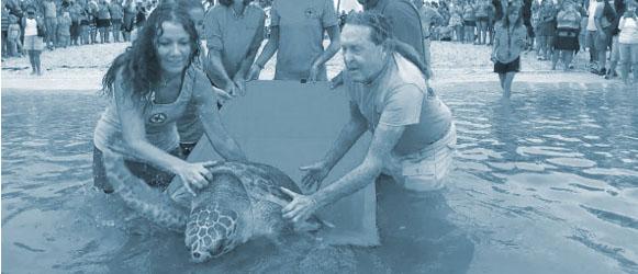 Turtle Hospital representatives release a rehabilitated turtle into the wild
